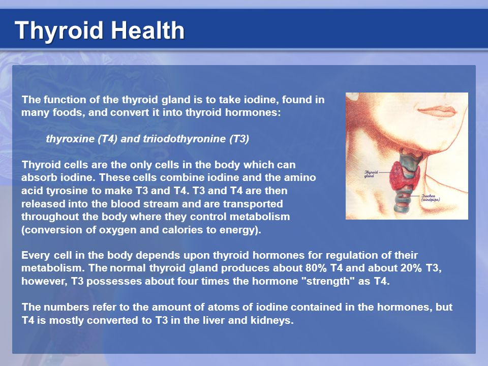 Thyroid Health The function of the thyroid gland is to take iodine, found in many foods, and convert it into thyroid hormones: