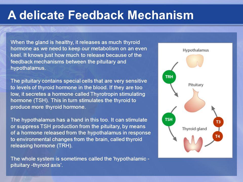 A delicate Feedback Mechanism