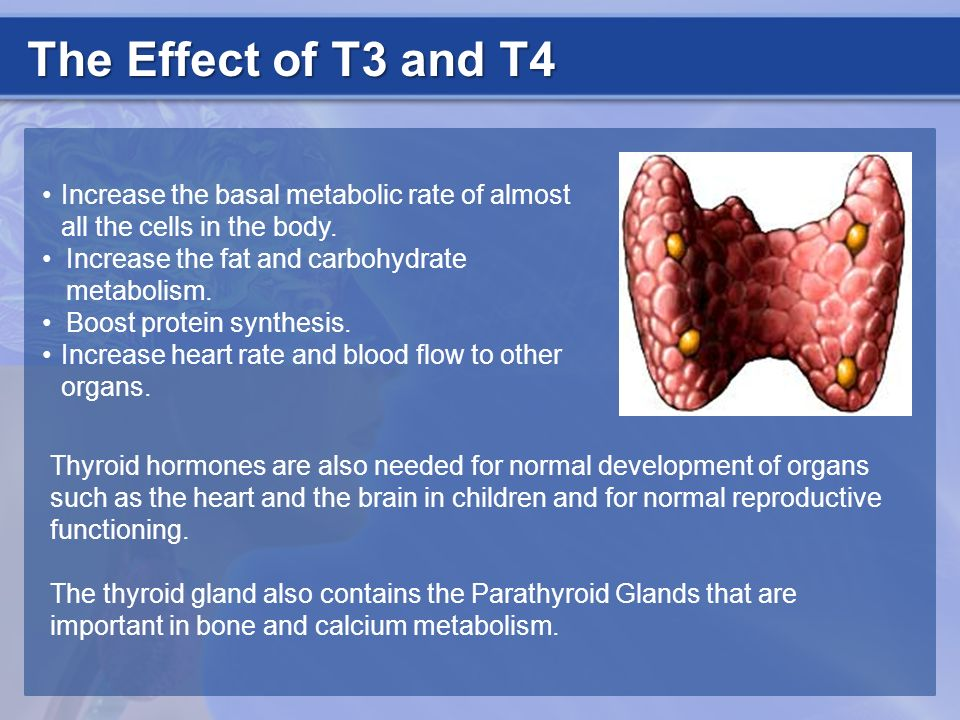 The Effect of T3 and T4 Increase the basal metabolic rate of almost all the cells in the body. Increase the fat and carbohydrate metabolism.