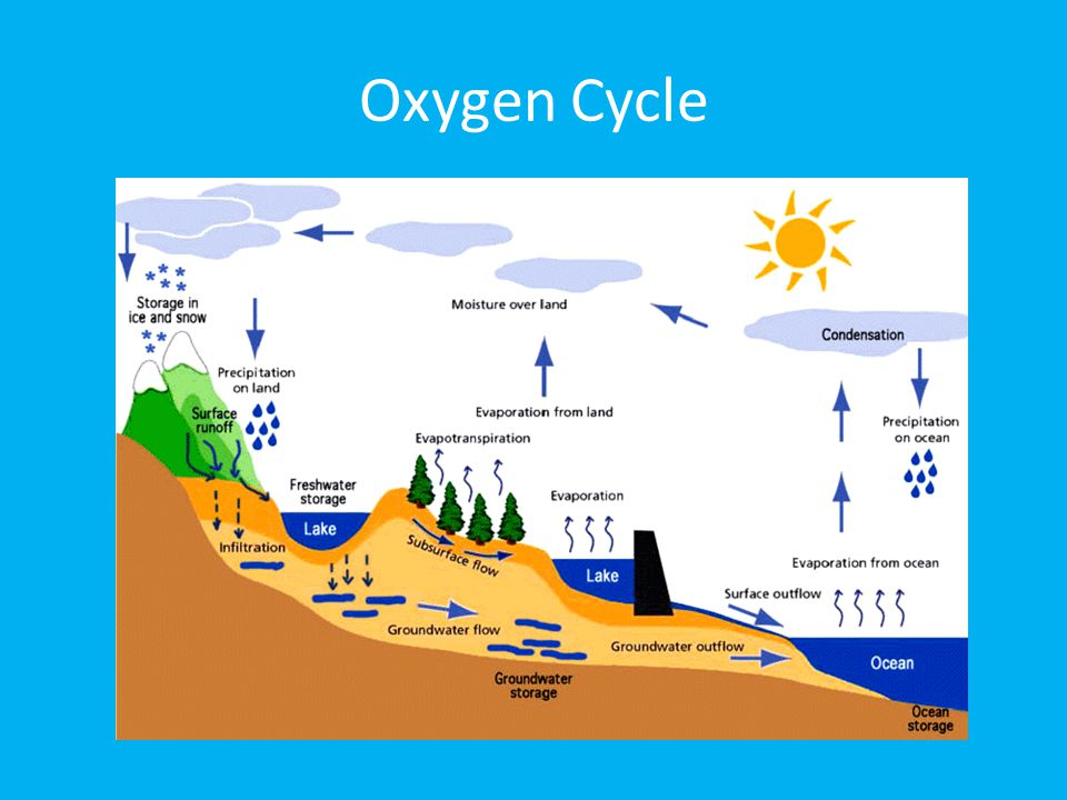 essays on nitrogen The diagram illustrates the sequence of nitrogen in general, the process includes a series of stages like a natural circle we can see that nitrogen moves in a cycle.
