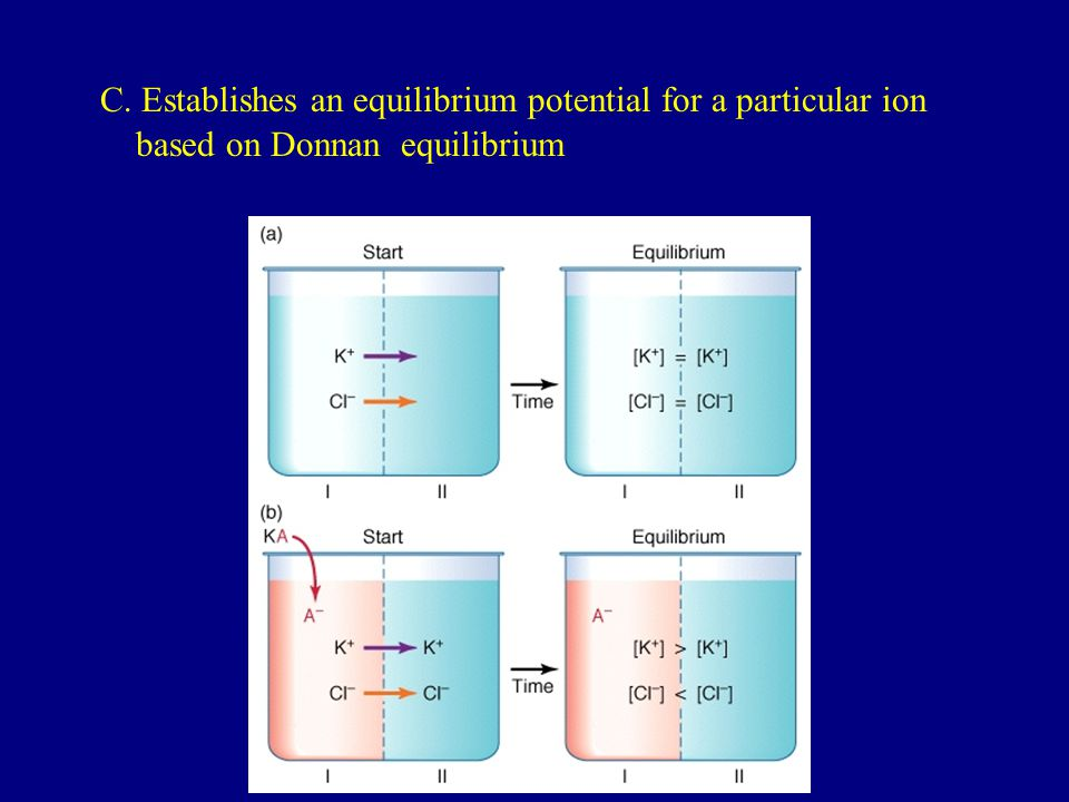C. Establishes an equilibrium potential for a particular ion
