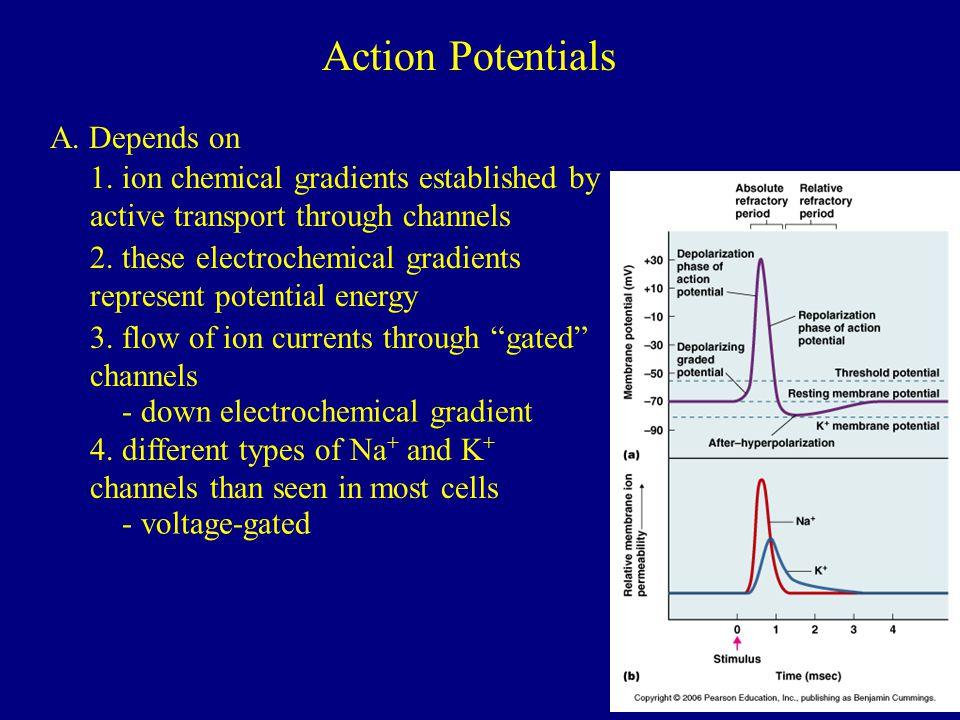 Action Potentials A. Depends on