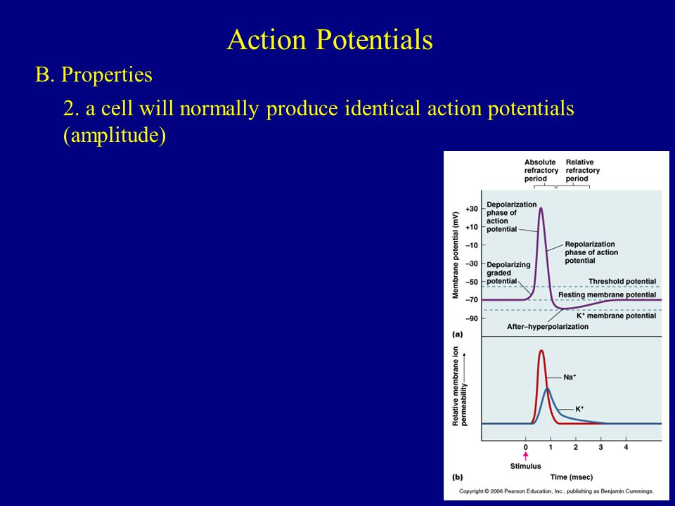 Action Potentials B. Properties