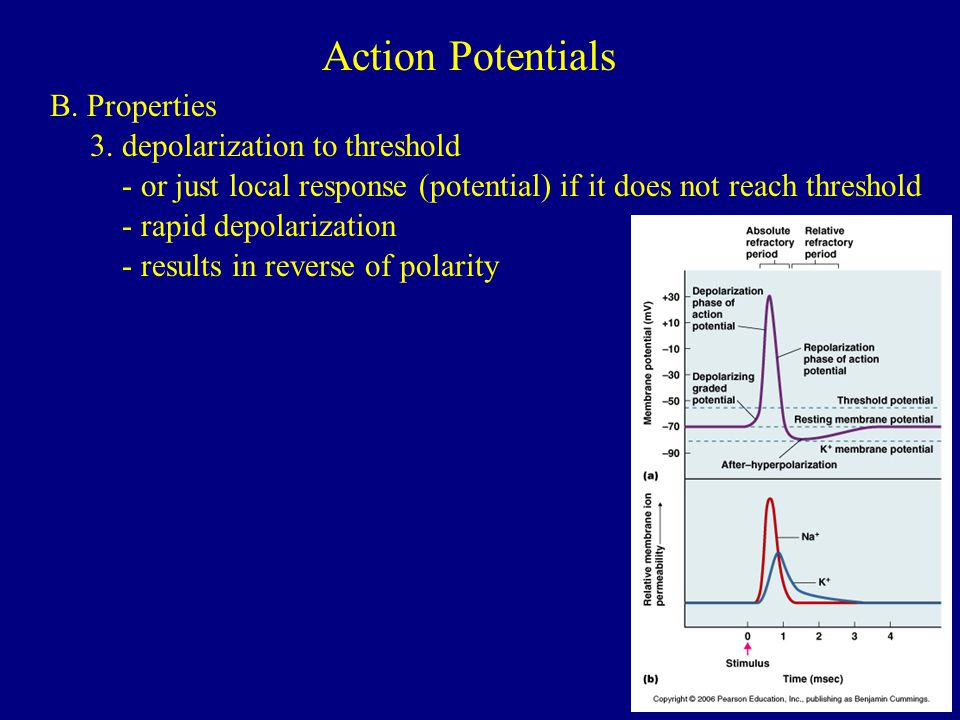 Action Potentials B. Properties 3. depolarization to threshold