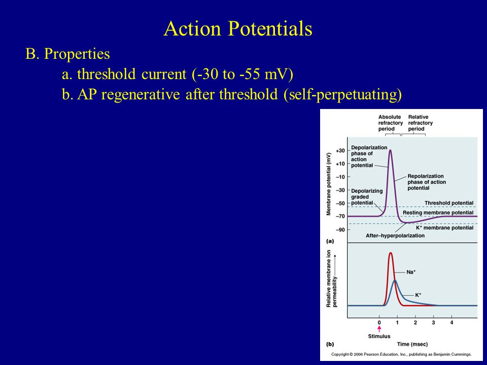Action Potentials B. Properties a. threshold current (-30 to -55 mV)