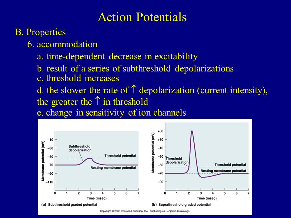 Action Potentials B. Properties 6. accommodation