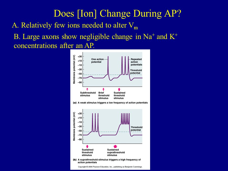 Does [Ion] Change During AP
