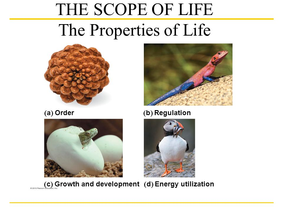 """properties of life Water is a participant in the """"life of the cell,"""" and here i describe some of the   control of water transport and osmosis, wetting properties, heat."""