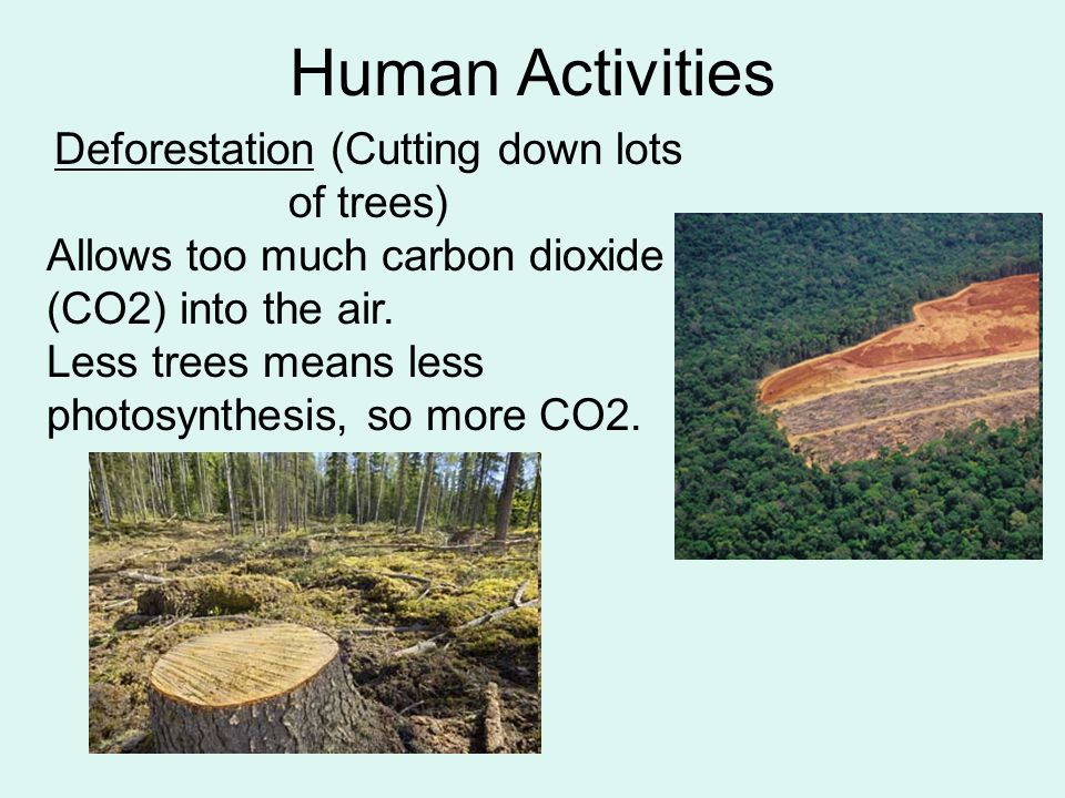 Deforestation (Cutting down lots of trees)