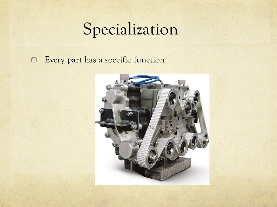 Specialization Every part has a specific function