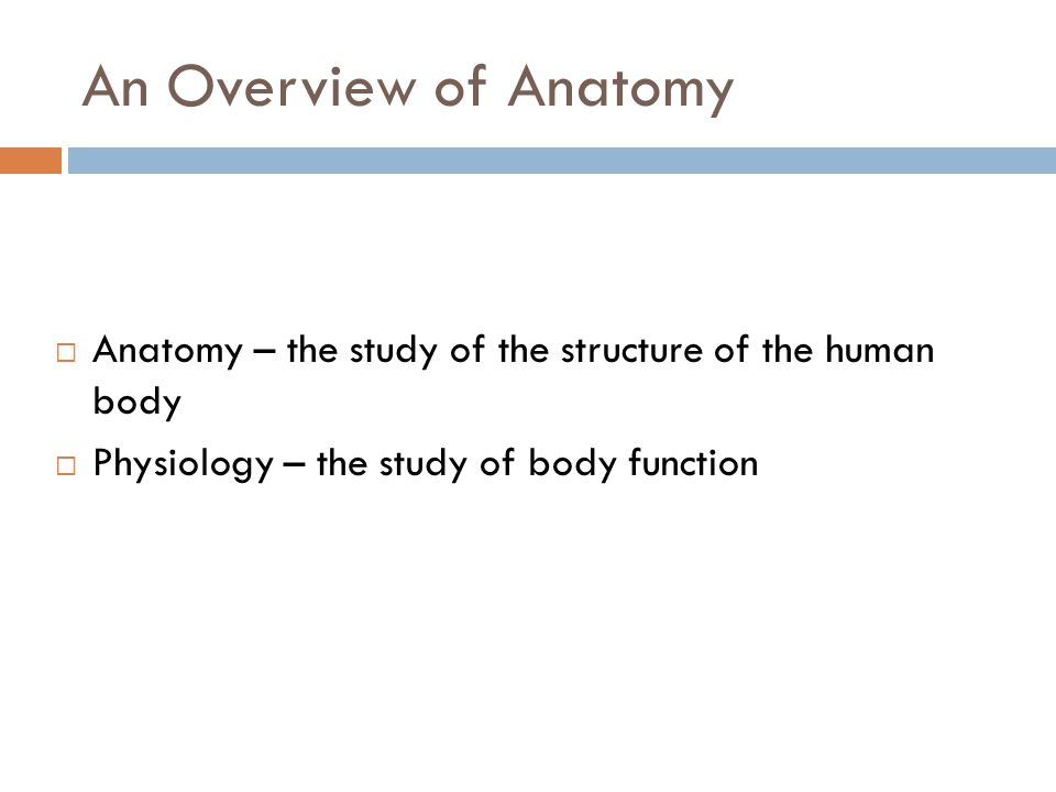 an overview of anatomy