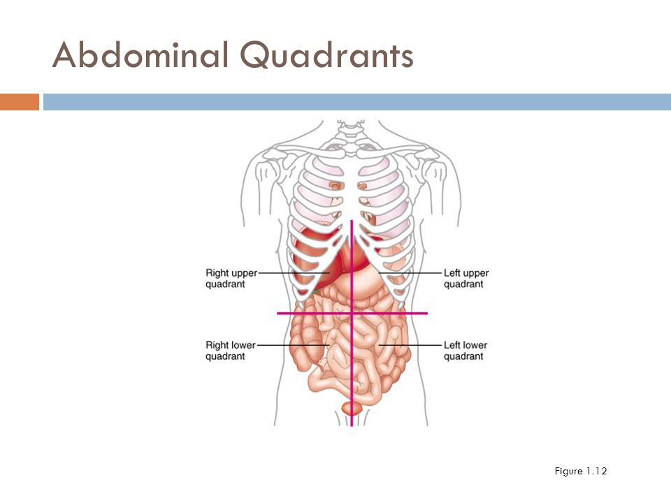 Pancreatitis likewise Abdominal Cavity Membranes Abdominal Cavity Wikipedia together with 2547700 likewise Abdominal Cavity Membranes Abdominal Cavity Wikipedia additionally 4859768. on abdominal cavity membranes