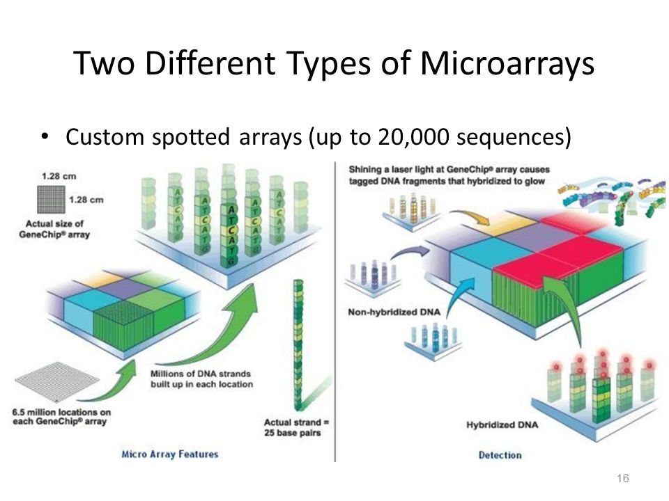 Two Different Types of Microarrays