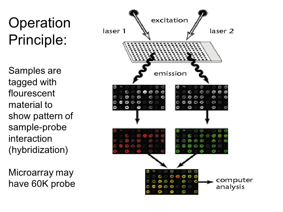 Microarray analysis Operation Principle: Samples are tagged with