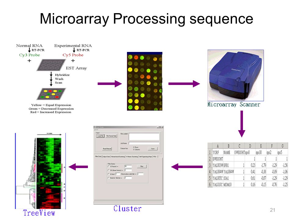 Microarray Processing sequence