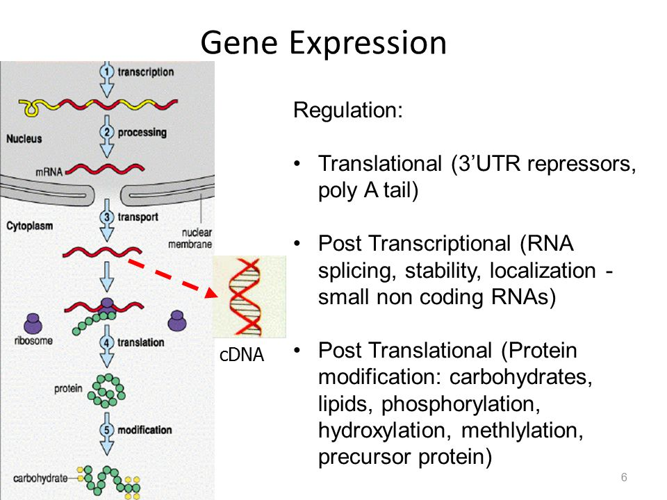 Gene Expression Regulation: