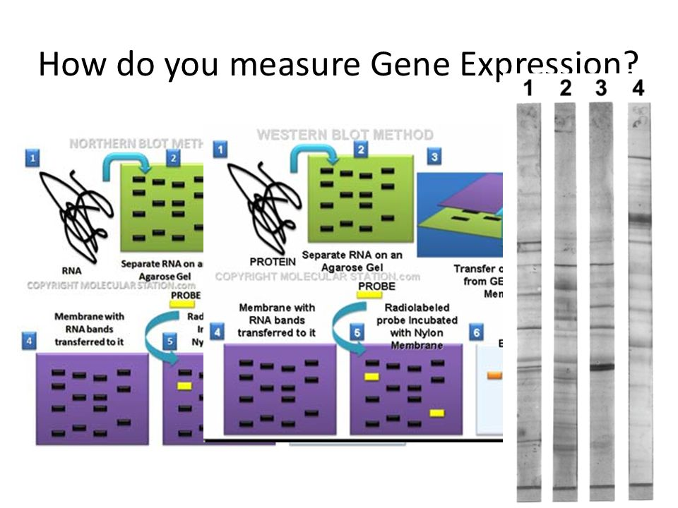 How do you measure Gene Expression