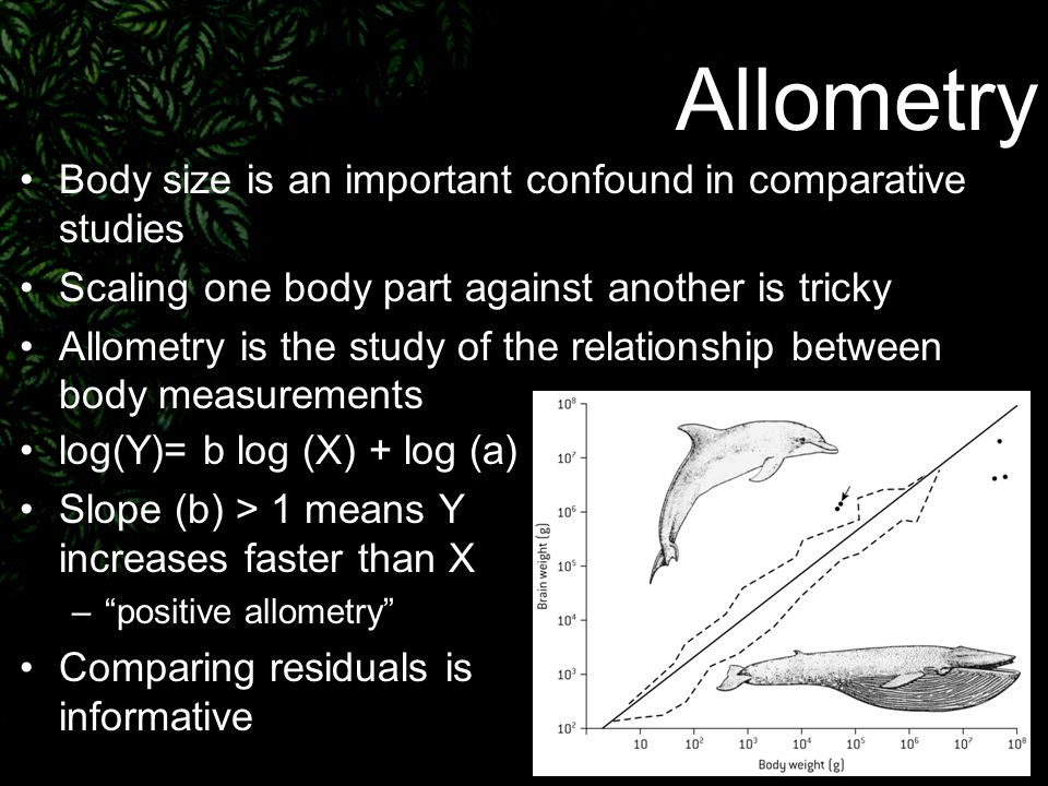 Allometry | Definition of Allometry by Merriam-Webster