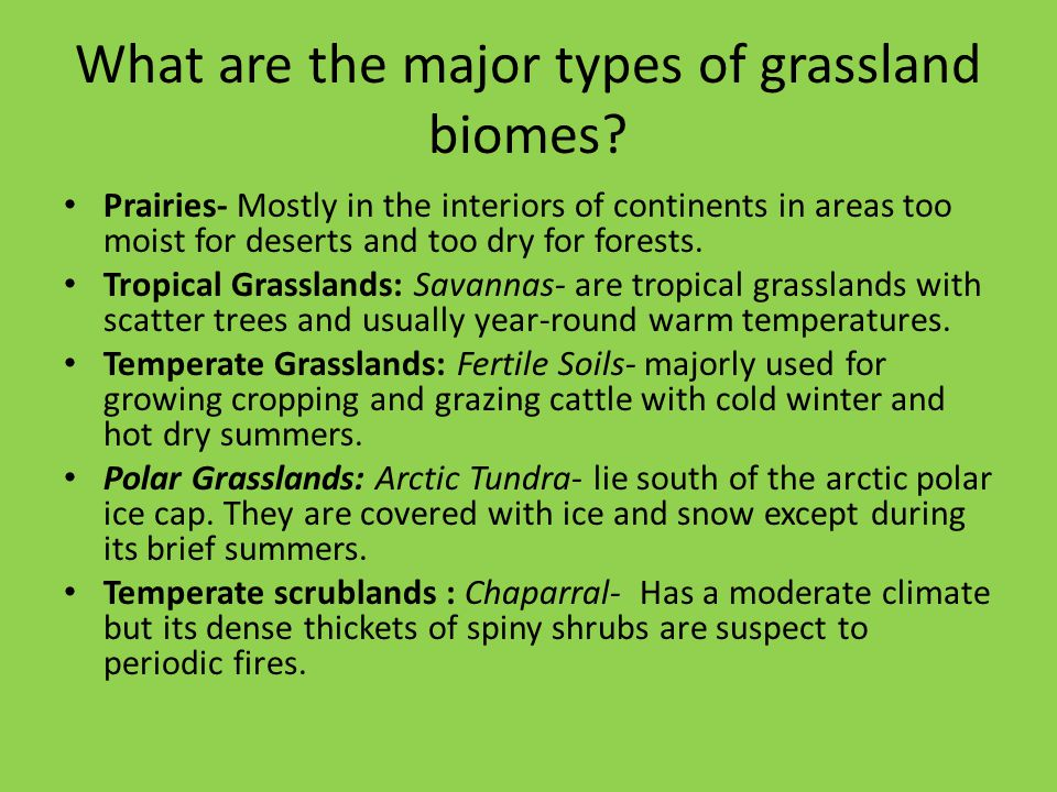 What are the major types of grassland biomes