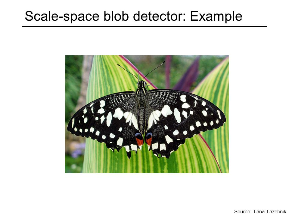 Scale-space blob detector: Example