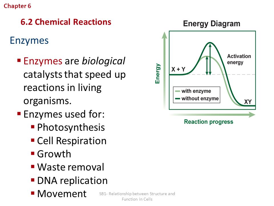 what is the relationship between biology and chemistry Specifications in biology, chemistry and physics to ensure progression from key  stage 3 national  describe the relationship between health and disease.