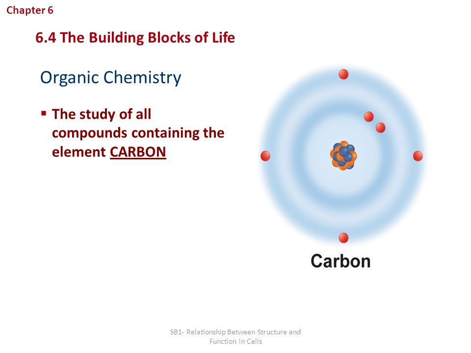 what is the relationship between biology and chemistry Biology and chemistry are closely related studies which overlap chemistry is more basic to existence-it is the study of the composition of matter and all associated structures, properties, and reactions.