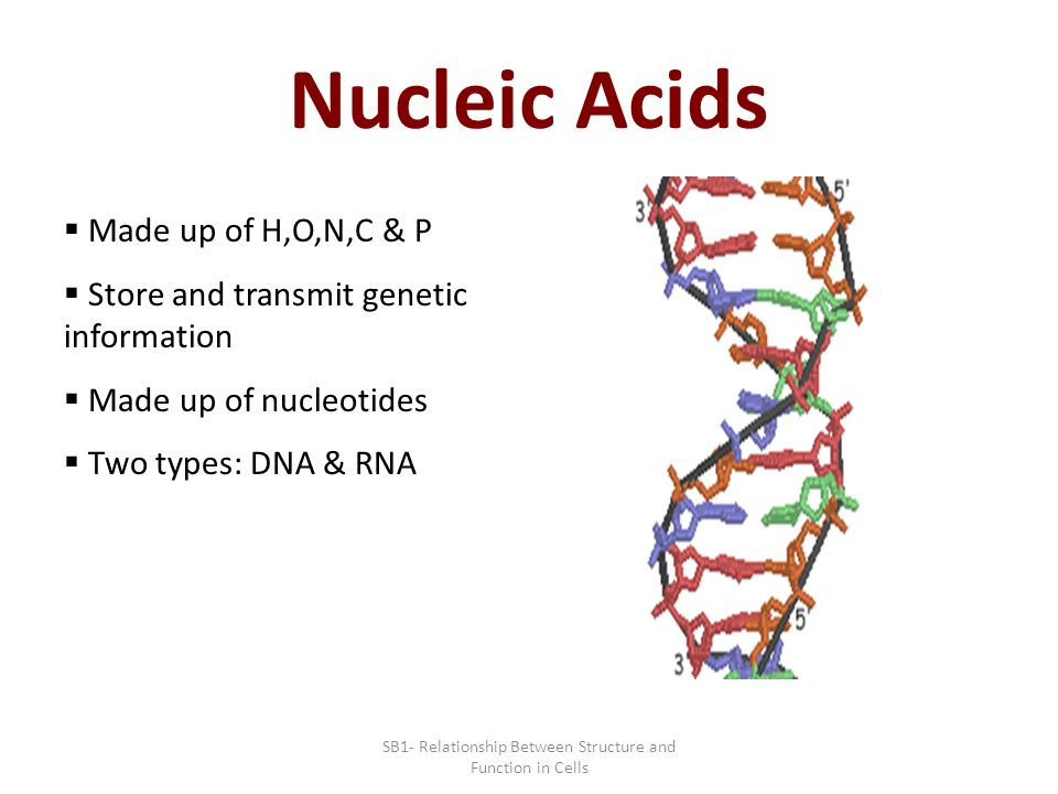 what is the structural relationship between nucleic acids and atp