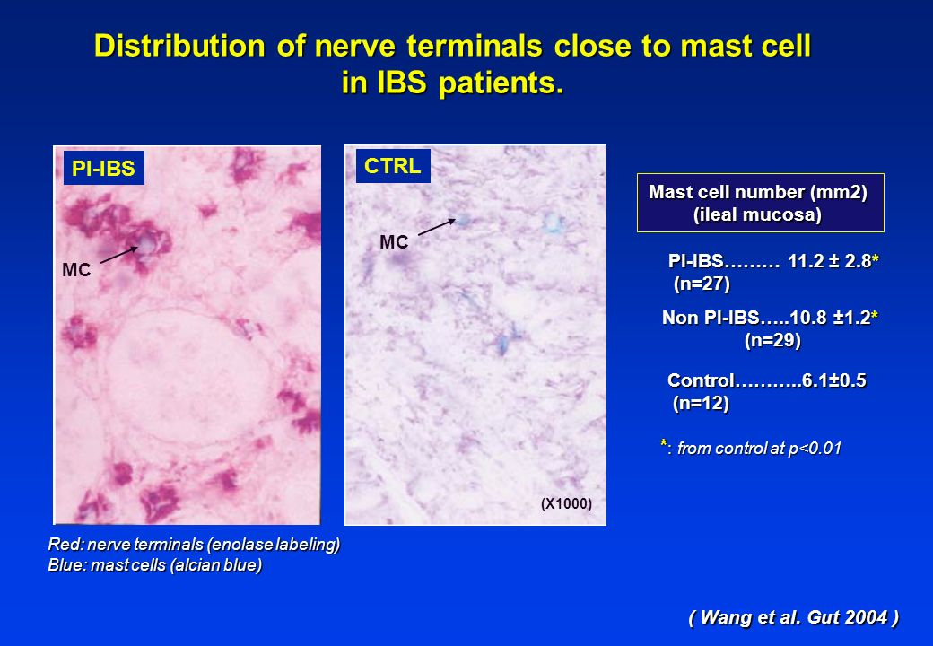 Distribution of nerve terminals close to mast cell