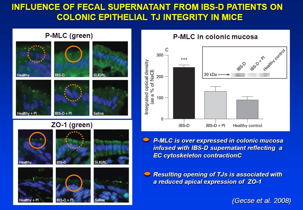 INFLUENCE OF FECAL SUPERNATANT FROM IBS-D PATIENTS ON