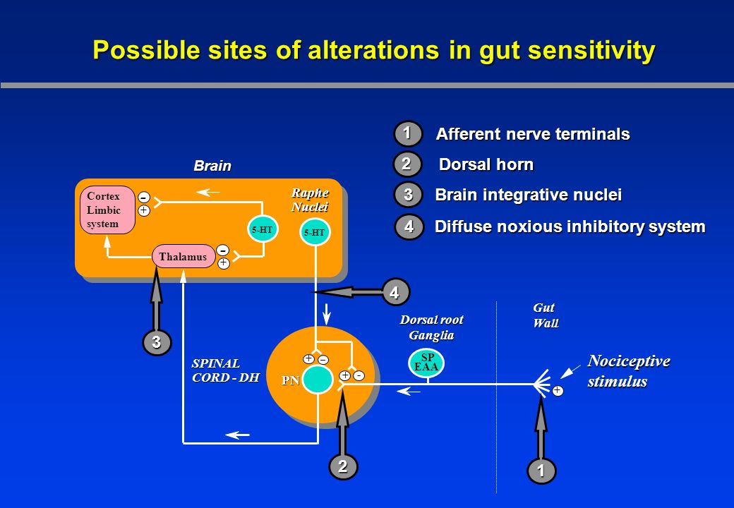 Possible sites of alterations in gut sensitivity