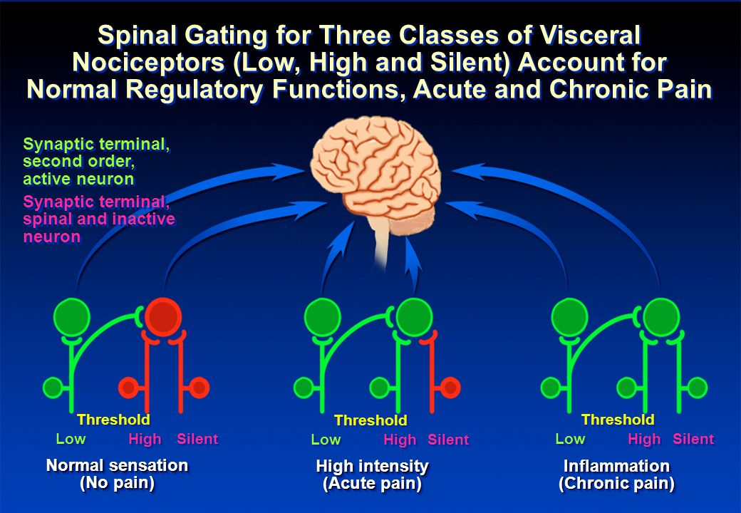 Spinal Gating for Three Classes of Visceral Nociceptors (Low, High and Silent) Account for Normal Regulatory Functions, Acute and Chronic Pain