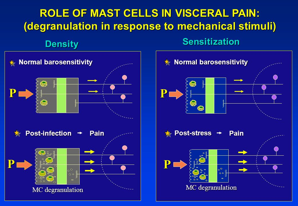 P P P P ROLE OF MAST CELLS IN VISCERAL PAIN: