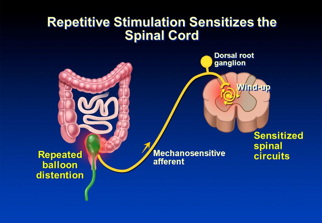Repetitive Stimulation Sensitizes the Spinal Cord