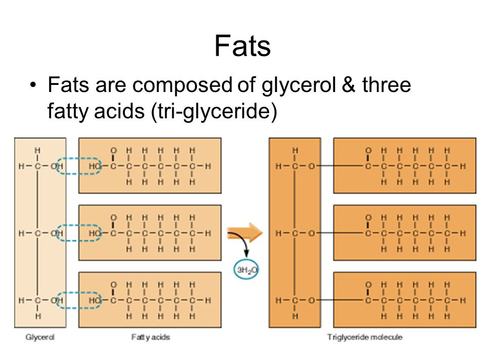 Fats Fats are composed of glycerol & three fatty acids (tri-glyceride)