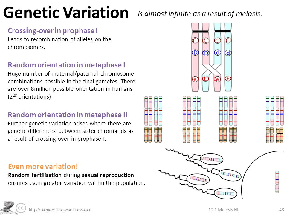 How Does Sexual Reproduction Lead To Variation