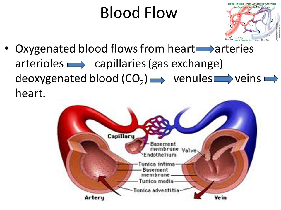 Which veins carry oxygenated blood? - Quora