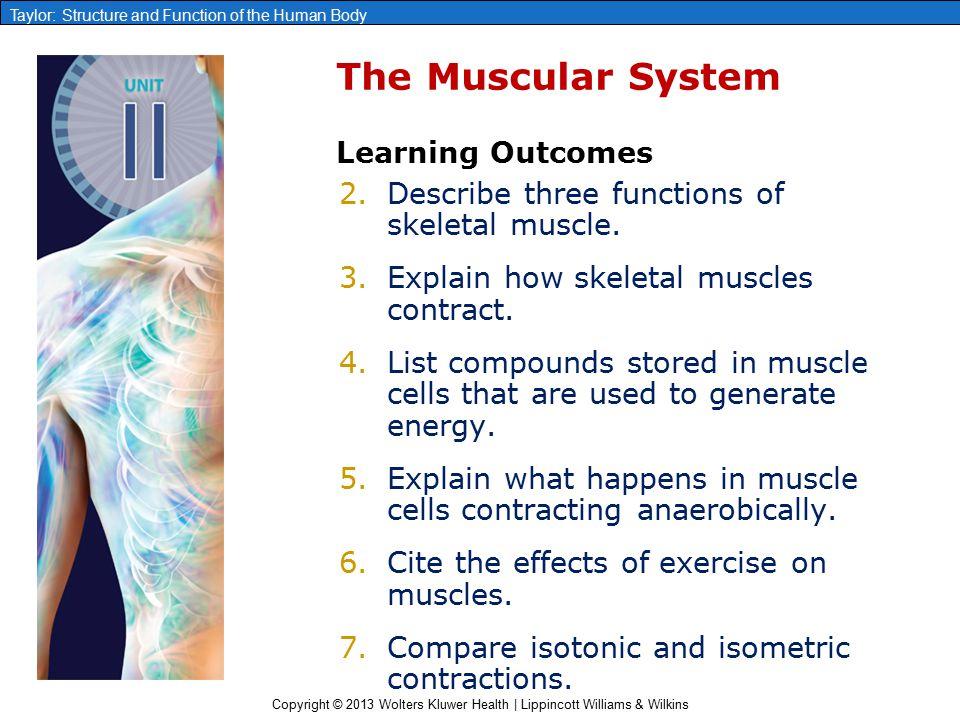 chapter 7 the muscular system ppt video online download. Black Bedroom Furniture Sets. Home Design Ideas
