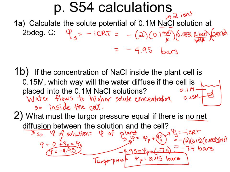 2 what must the turgor pressure equal if there is no net diffusion between the solution and the cell Here are some news stories involving what must the turgor pressure equal if there is no net diffusion between the solution and the cell.