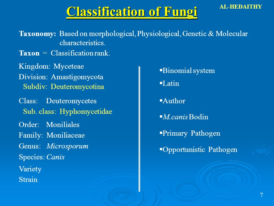 classification system of ectomychorrhizae fungi Orchid (angiosperm) aashna narang topics:  or an association that develops when a plant's root system becomes infected with fungi  particularly of the.