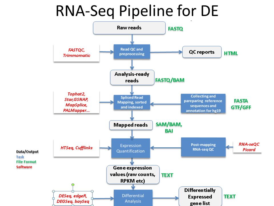 RNA-Seq Pipeline for DE