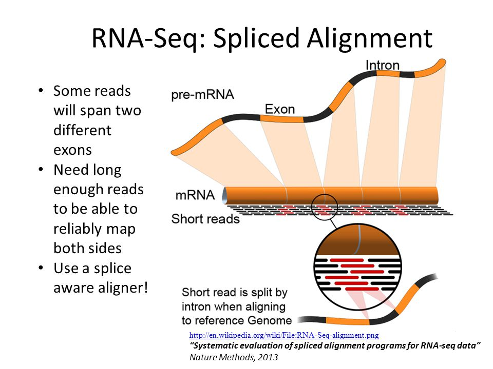 RNA-Seq: Spliced Alignment