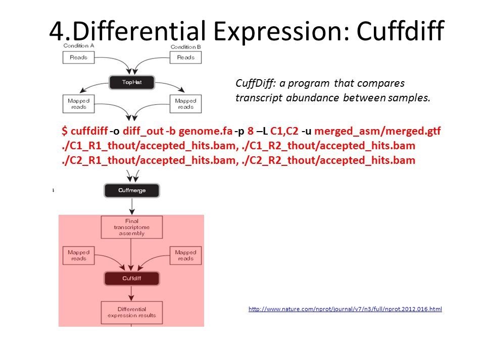 4.Differential Expression: Cuffdiff