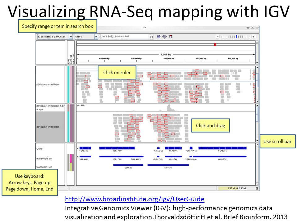 Visualizing RNA-Seq mapping with IGV