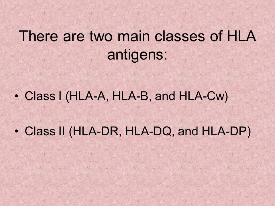 There are two main classes of HLA antigens: