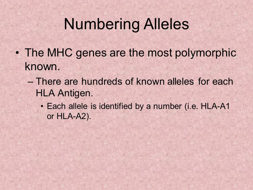 Numbering Alleles The MHC genes are the most polymorphic known.