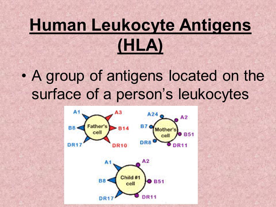 Human Leukocyte Antigens (HLA)