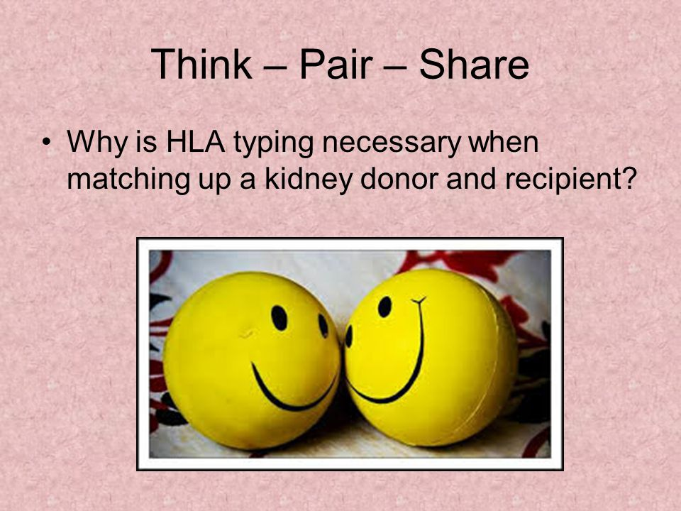 Think – Pair – Share Why is HLA typing necessary when matching up a kidney donor and recipient