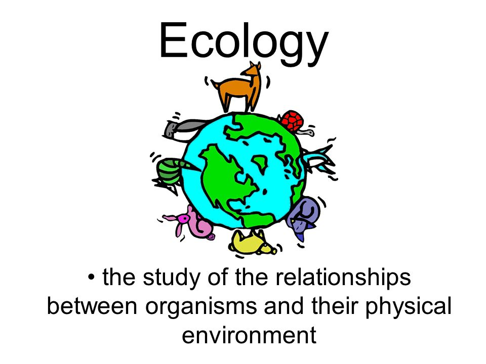 relationship between physics and environment