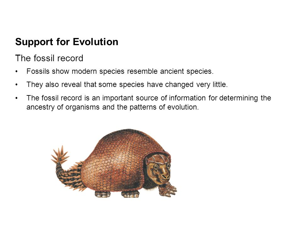 patterns of evolution essay Free essays from bartleby | hominid evolution the evolution of hominids has  been and still is a heated topic of debate many scientists debate over which.