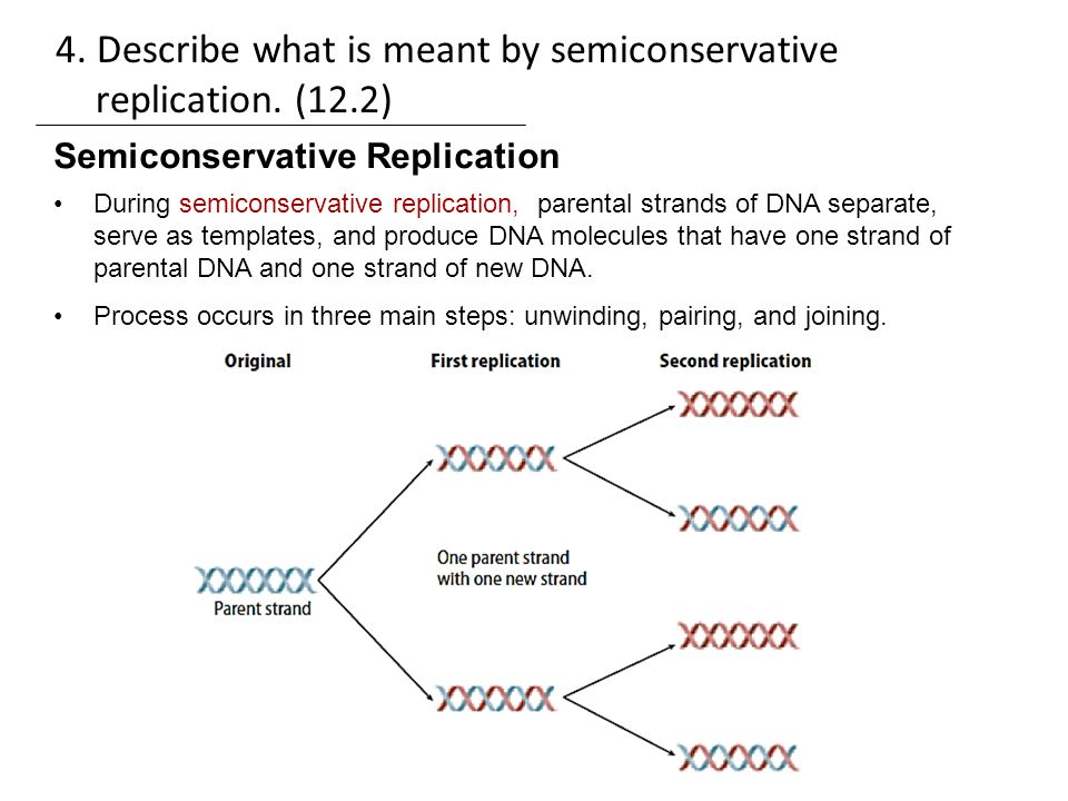 Semiconservative replication involves a template what is the semiconservative replication involves a template what is the essay exam review ppt video online download describe pronofoot35fo Choice Image